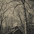Old cabin and tree by Tatianaphoto