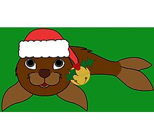 Brown Baby Seal with Santa Hat, Holly & Gold Bell Photographic Print