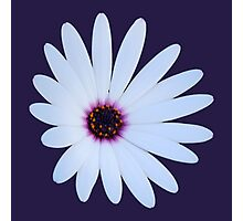 White Daisy with Purple Center Photographic Print