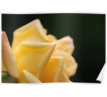 Yellow Rose2 Poster