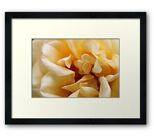 Yellow Rose4 Framed Print