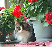Prince of the Geraniums by Righteous Zombie