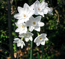 Purity – Winter's Blooms by Therese Doherty