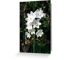 Purity – Winter's Blooms Greeting Card