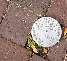Survey marker by laurabaker