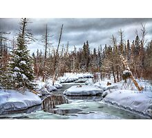 Winter Rabbits in Northern Maine Photographic Print