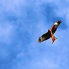 kite on the hunt by bundug