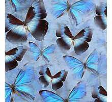 Blue Butterfly Collage Photographic Print