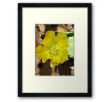 Yellow Bloom Framed Print