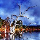 Dead Tree In Lake Eildon by djzontheball