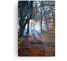 Chevin Forest Park #2 Metal Print