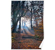 Chevin Forest Park #2 Poster