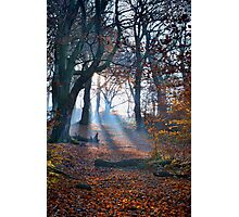 Chevin Forest Park #2 Photographic Print