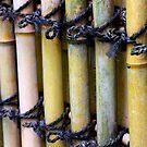 organic texture by yvesrossetti