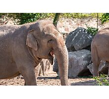 Close up of an Asian Elephant face Photographic Print