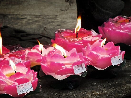 Lotus Candles  by Lucinda Walter