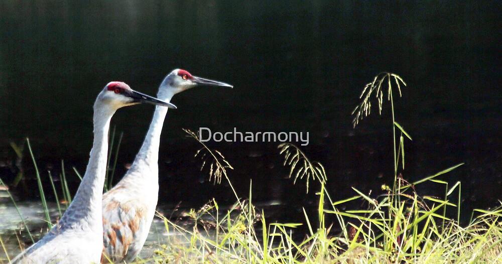 Sandhill Cranes Sunbathing by Docharmony