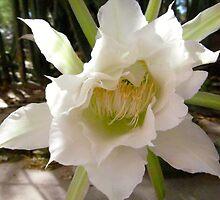 White Torch Flower by Randomshots68