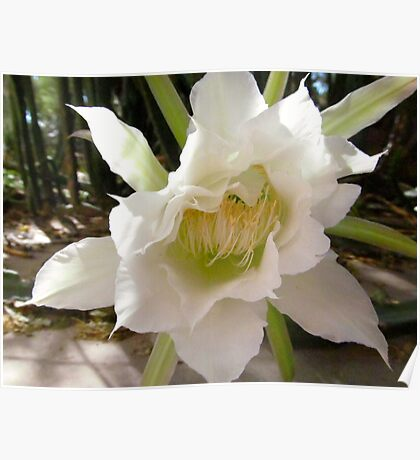 White Torch Flower Poster
