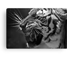 Bengal Tiger in B&W Canvas Print