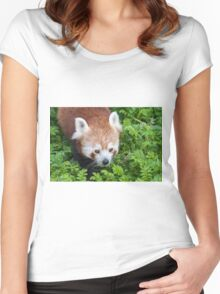 Red Panda close up of face Women's Fitted Scoop T-Shirt