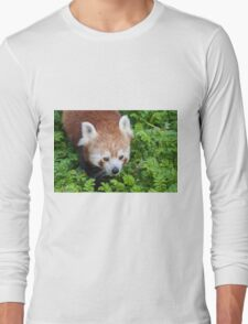 Red Panda close up of face Long Sleeve T-Shirt