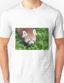 Red Panda close up of face T-Shirt