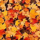 Fall Leaves by AudraJS