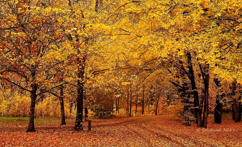A golden autumn day by bluetaipan