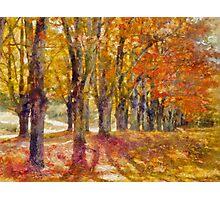 Maple Lane  Photographic Print