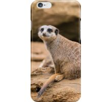 Meerkat on a rock iPhone Case/Skin