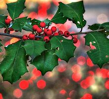 Holly berries and Christmas Lights by bannercgtl10