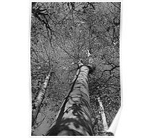 Trees Reaching Towards Sky Poster