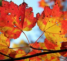 Candy Corn Leaves by Chris Coates