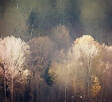 Ghosts of Autumn by DianaMatisz