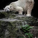 The Contented Bear by Chris Lord