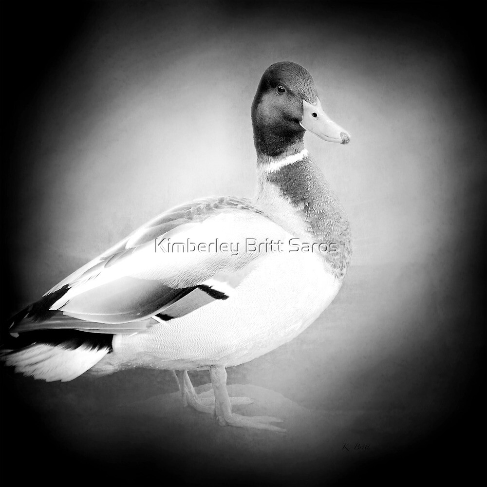 Mallard in Mono by KBritt