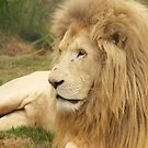 King of the Jungle  by AngelaHumphries