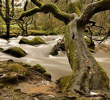 Twisted Tree At Golitha by dalekenworthy