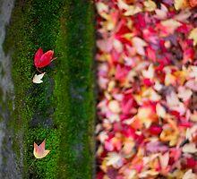 Fallen Moss by Sam Ryan