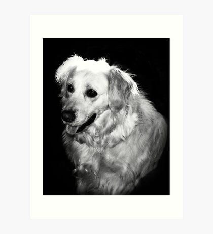 A Dogs Life Art Print