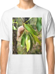 Mystery Native Fruit: Xylomelum pyriforme - woody pear. Classic T-Shirt