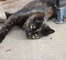 The Black Cat by AbigailJoy