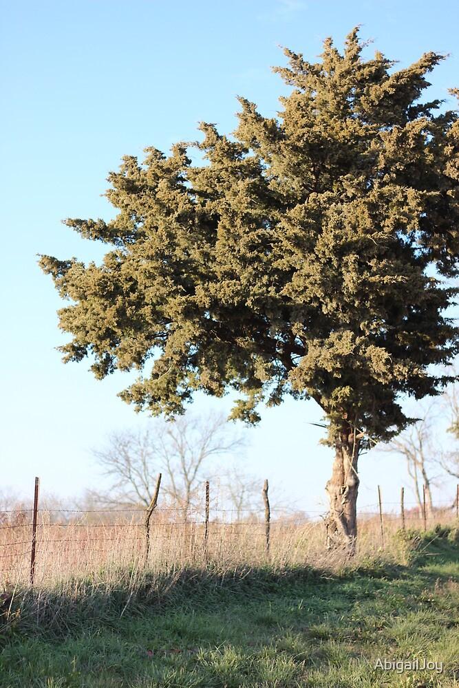 Lone Tree by AbigailJoy