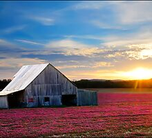 Spring growth of flowers and Barn at sundown by Randy & Kay Branham