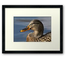 Portrait of Mallard Duck Hen on Pond Framed Print