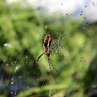 On His Web by AbigailJoy