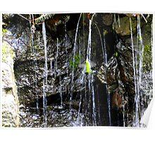 Hummingbird Bathing Poster