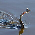 Anhinga with Fish by Frank Bibbins