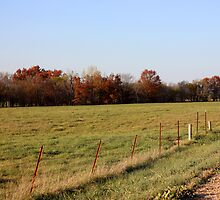 Fall Fenceline by AbigailJoy